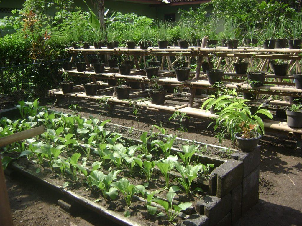 Budidaya Sayur di lahan sempit