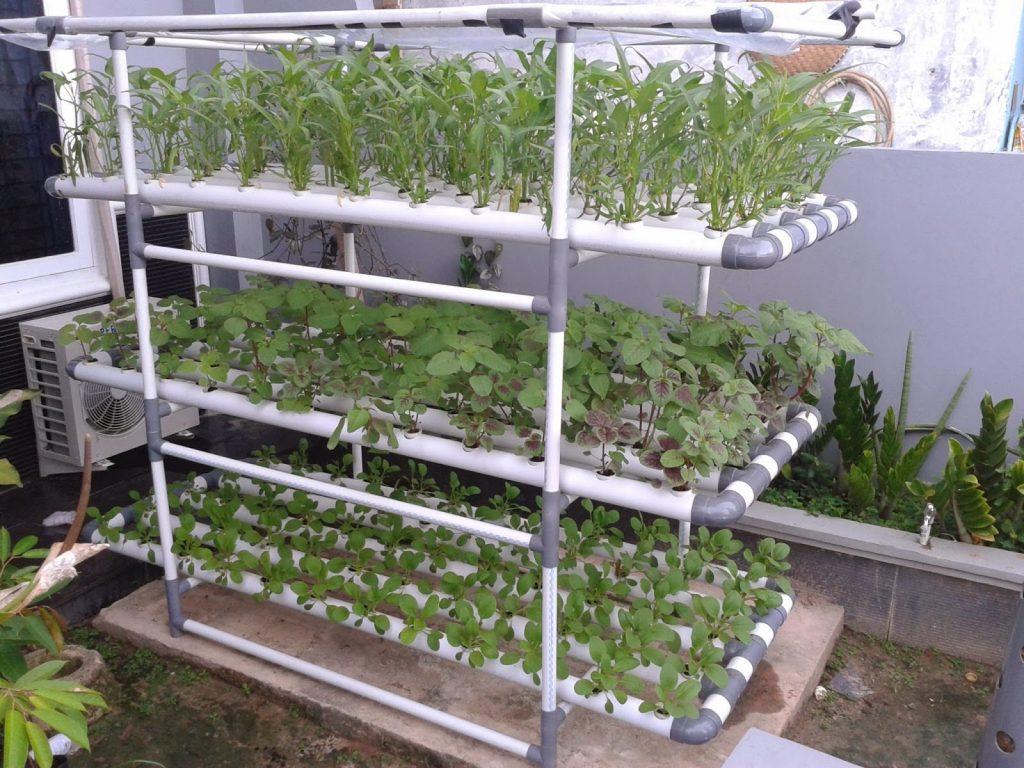instalasi tanaman hidroponik