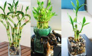 50 Inspirasi Tanaman Hias UNIK Indoor & Outdoor 1