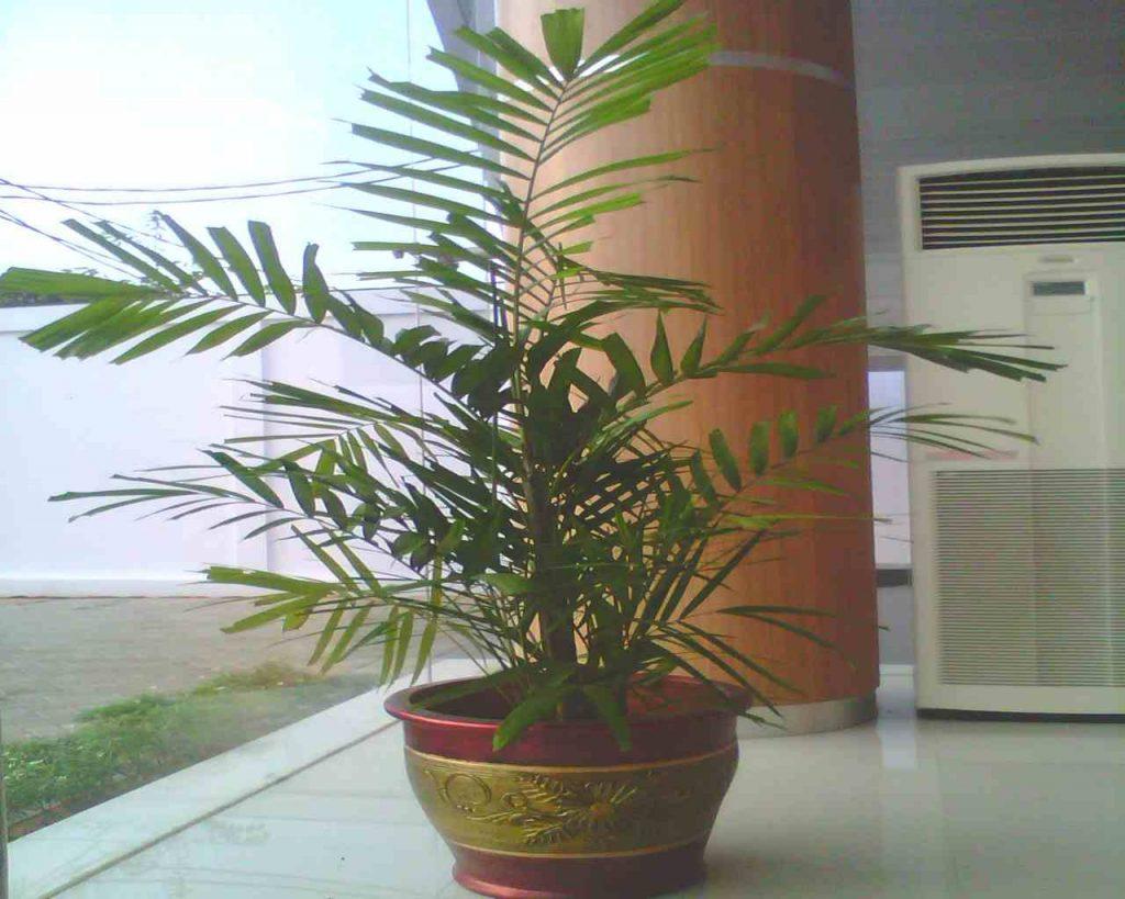 50 Inspirasi Tanaman Hias UNIK Indoor & Outdoor 6