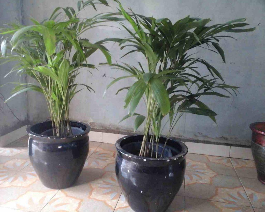 50 Inspirasi Tanaman Hias UNIK Indoor & Outdoor 7
