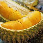 Bibit Durian Musangking