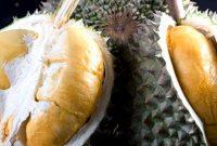 Daging Durian Duri Hitam
