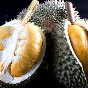 Durian Duri Hitam, Varietas Unggul Berbuah Cepat