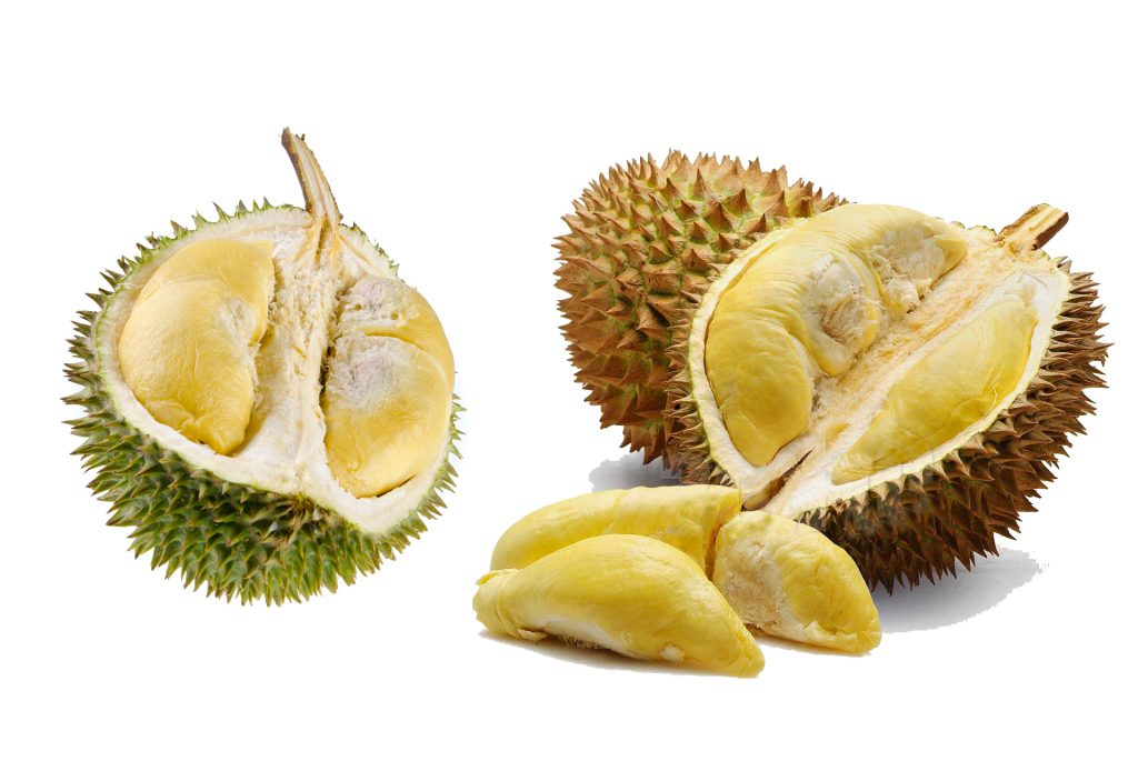 Varietas Durian Montong