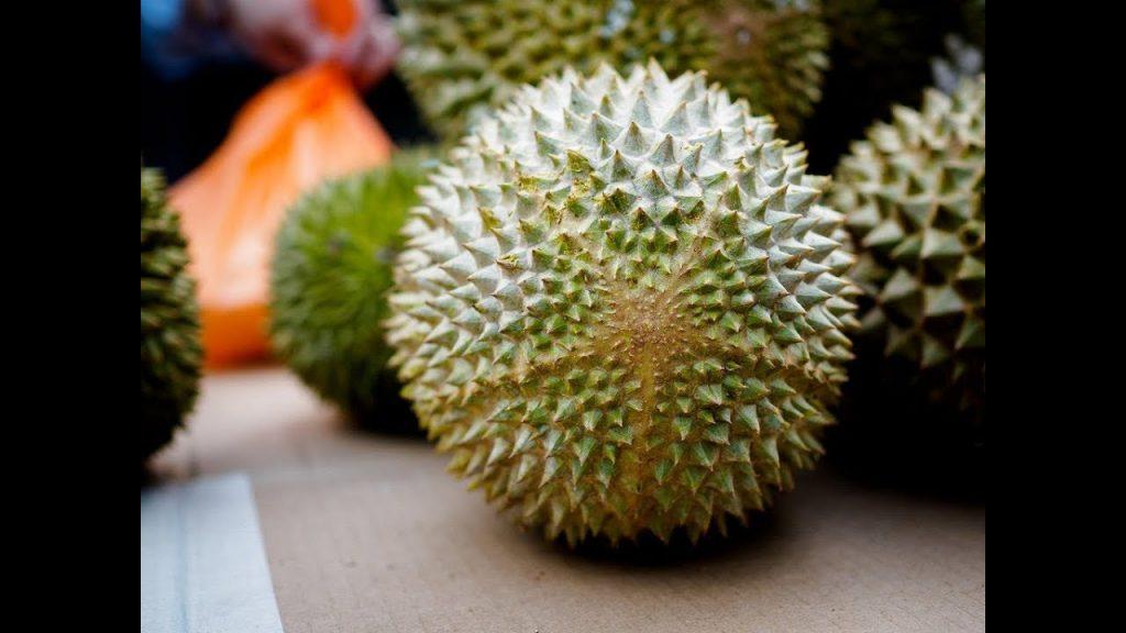 Varietas Durian Musang King
