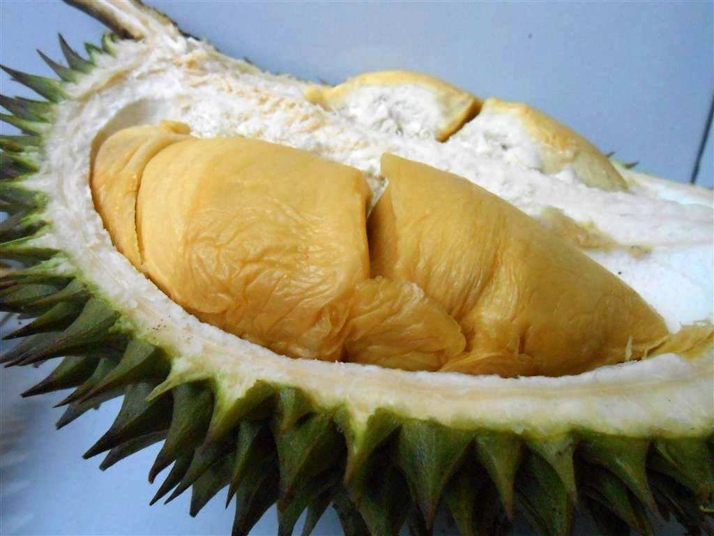 Varietas Durian bawor