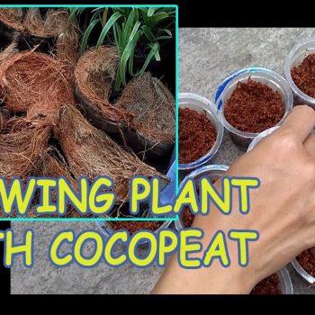 Cara Membuat Cocopeat
