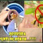 Insektisida Organik : Rokok Insektisida Organik PALING MANJUR?
