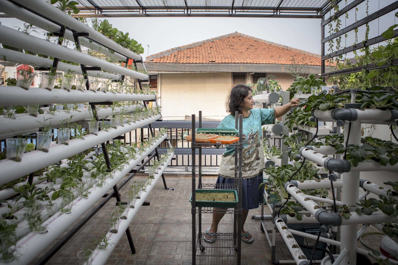 Berkebun di Rumah Metode Hidroponik