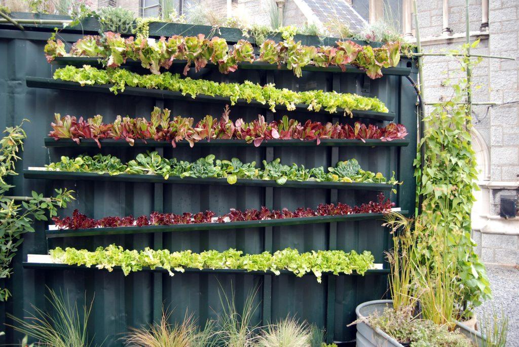 Berkebun di Rumah secara Vertikultur