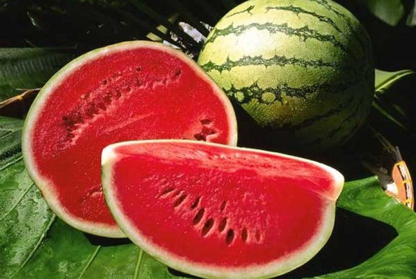 budidaya tanaman buah semangka
