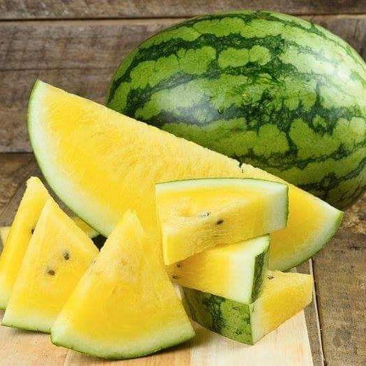 varietas semangka kuning