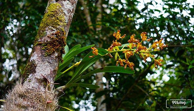 Tanaman Anggrek Menempel di Pohon