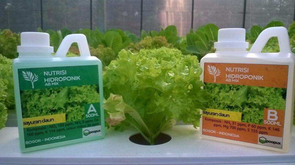 Cara Menanam Hidroponik dengan Botol Bekas Nutrisi AB mix