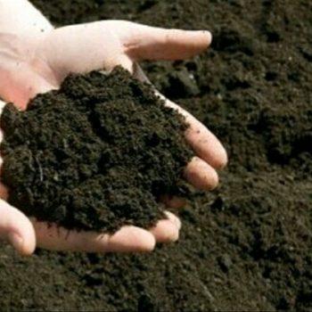 Trichoderma & Pemanfaatannya untuk Membuat Kompos Lebih Efektif