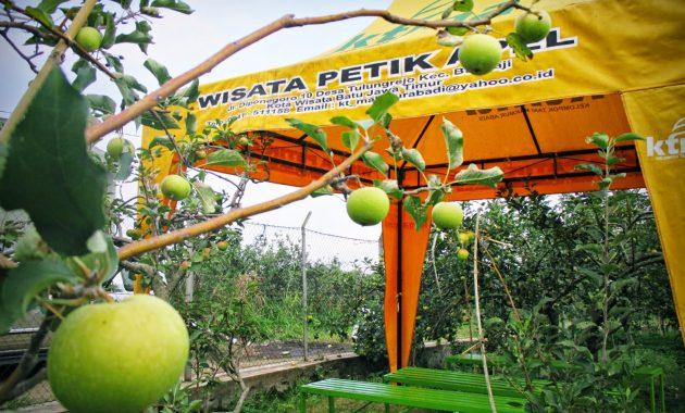 Agrowisata Petik Apel di Batu