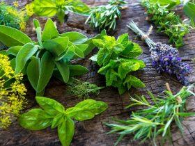 16 Jenis tanaman pengusir nyamuk