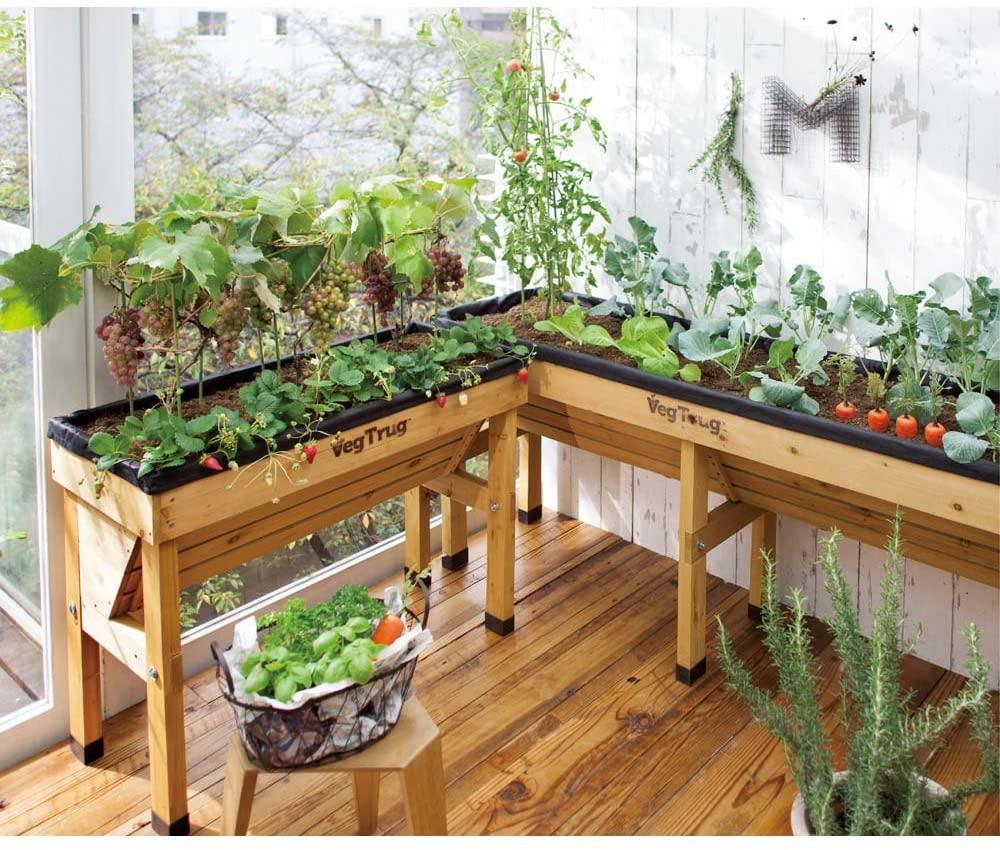 Tips SUKSES Berkebun di Apartemen & Rumah tanpa Halaman Taman Inspirasi SAFA