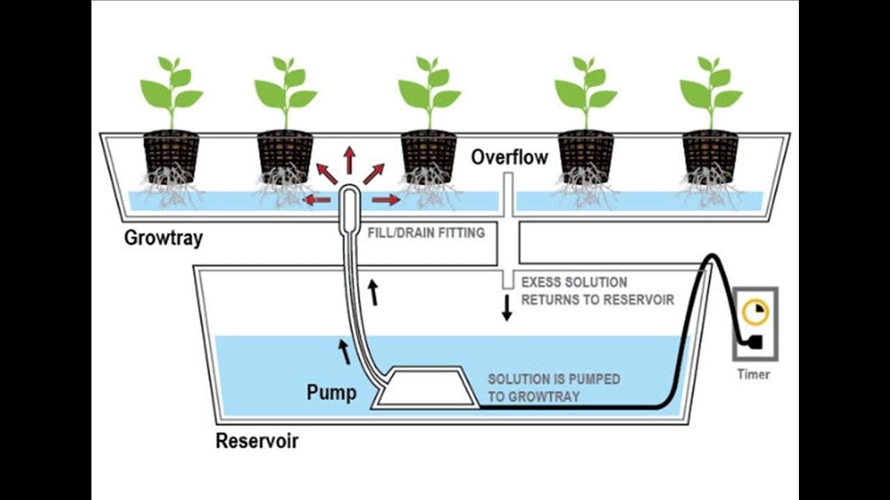 Sistem aquaponik Model Pasang Surut