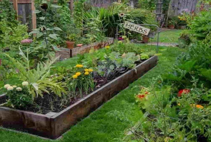 Ide Taman dari Tanaman Obat