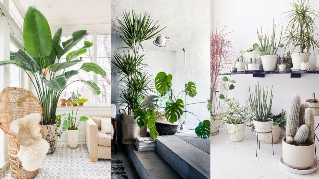 Menambah Hiasan Alami dalam Ruangan Apartemen