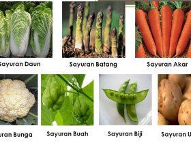 10 Jenis Sayuran Berdasarkan Bagian yang Dapat Dimakan