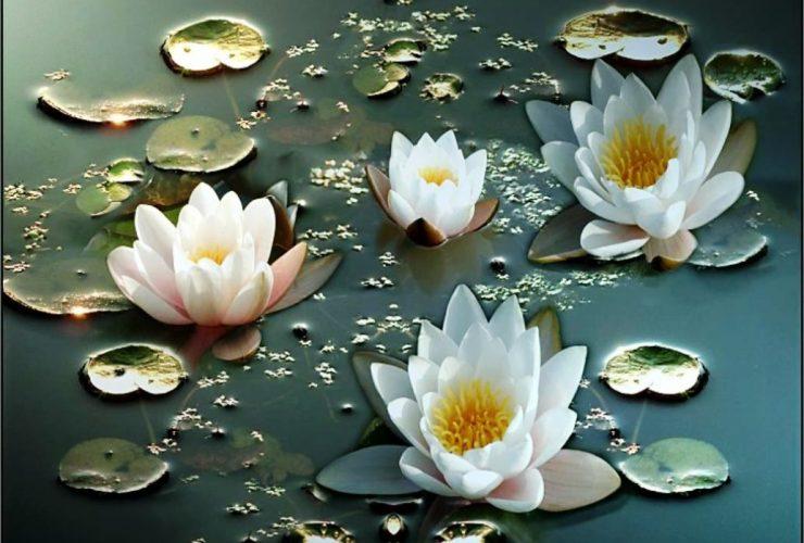 Tanaman Bunga Lotus atau Teratai